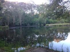 大学内の池